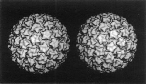Fig. 10: Reconstrucție 3D a virusului BPV. Sursa: Baker et al. (1991).