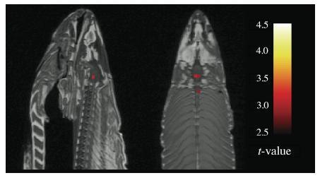 Meta I. Neuroștiință, peștele mort